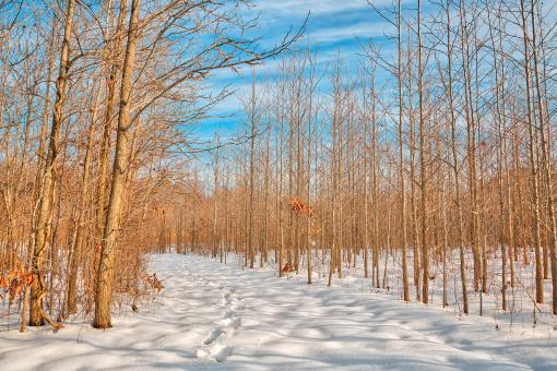 Free Stock Photo of Bare Winter Tree Trail - HDR