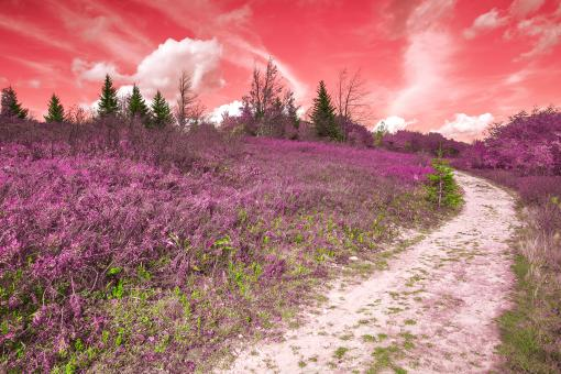Free Stock Photo of Dolly Sods Fantasy Trail - HDR