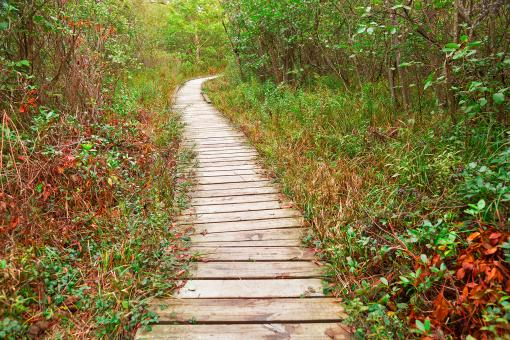 Free Stock Photo of Winding Boardwalk Trail - Dolly Sods