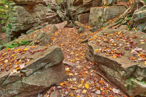 Free Stock Photo of Autumn Midway Crevasse - Ricketts Glen HDR
