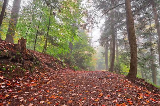Free Stock Photo of Misty Autumn Trail - Ricketts Glen HDR