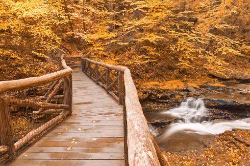 Free Stock Photo of Gold Autumn Boardwalk Bridge
