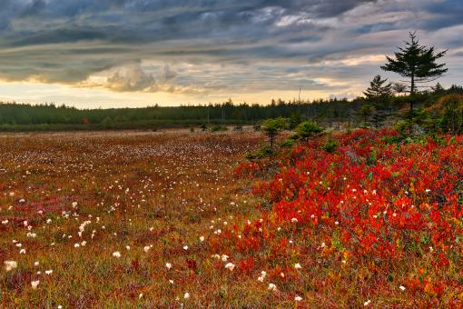 Free Stock Photo of Golden Ruby Hour - Dolly Sods HDR