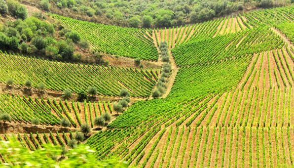 Free Stock Photo of Mosaic of Vineyards and Olive Tree Groves - Douro Valley