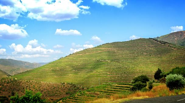 Free Stock Photo of Terraced Vineyards - Walled Terraces - Douro Valley
