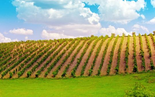 Free Stock Photo of  Vineyard in the Douro Valley - Port Wine