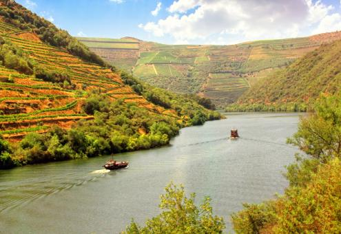 Free Stock Photo of Vineyards on the Banks of Douro River - Douro Valley - Portugal