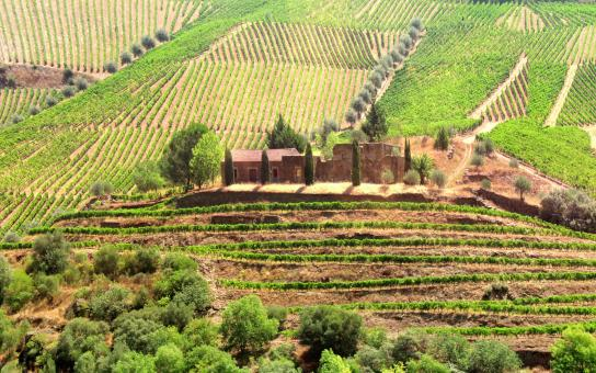 Free Stock Photo of Vineyards Surrounding Old Country Estate - Douro Valley