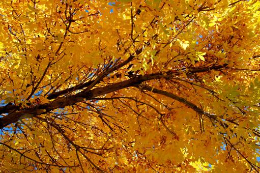 Free Stock Photo of Colorado Golden Autumn II