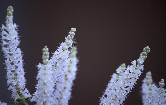 Free Stock Photo of Small White Flowers