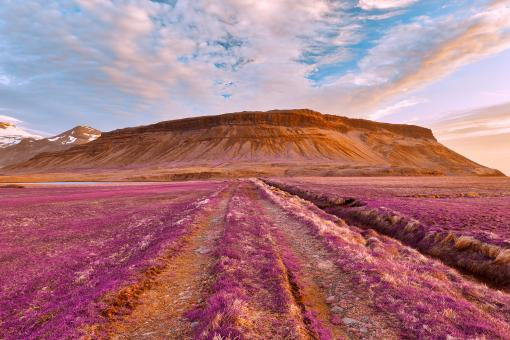 Free Stock Photo of Iceland Sunset Tractor Trail - Tickle Me Purple
