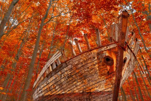 Free Stock Photo of Fall Forest Shipwreck