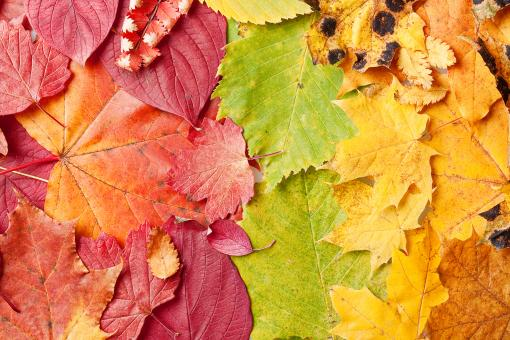 Free Stock Photo of Autumn Leaves Background