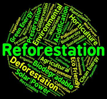 Free Stock Photo of Reforestation Word Shows Again Woodlands And Words