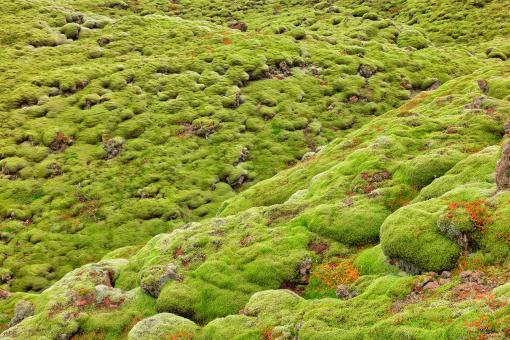 Free Stock Photo of Iceland Rock Moss