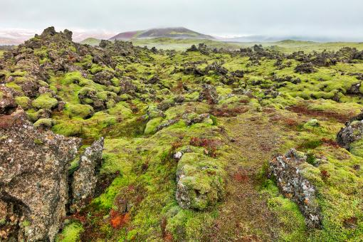 Free Stock Photo of Of Moss, Mist, and Rugged Rocks
