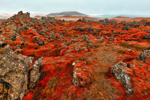 Free Stock Photo of Blood Moss Netherworld
