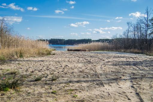 Free Stock Photo of Sandy shore of a forest lake with reeds in the background of blue sky