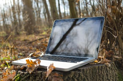 Free Stock Photo of Working on laptop in forest