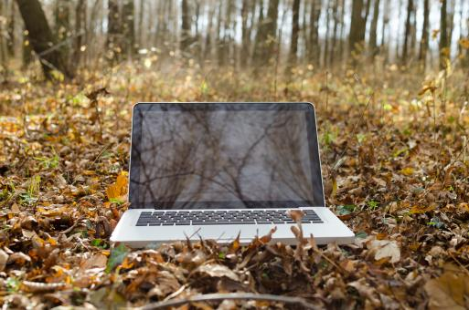 Free Stock Photo of Working on Notebook in Forest