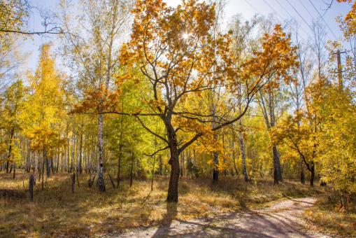 Free Stock Photo of Sunny autumn forest