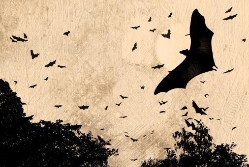 Free Stock Photo of Horror and Halloween Concept - Bats Flying Over Spooky Woods