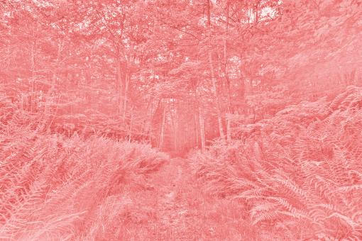 Free Stock Photo of Pink Fern Bleach Trail