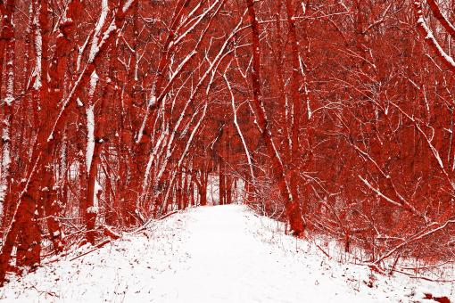 Free Stock Photo of Red Winter Woods