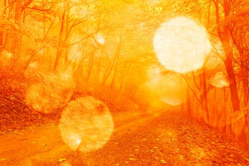 Free Stock Photo of Bokeh Fire Forest Road