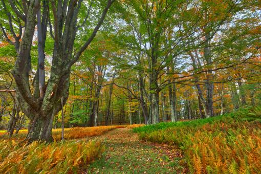 Free Stock Photo of Autumn Fern Trail - Canaan Valley
