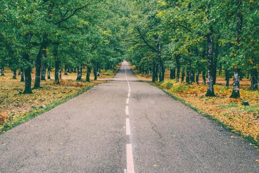 Free Stock Photo of Asphalt Road in the Forest with Trees on both Sides