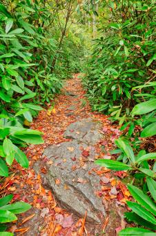 Free Stock Photo of Rocky Rhododendron Trail - Pase Point