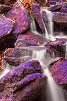 Free Stock Photo of Ultraviolet Moss Falls