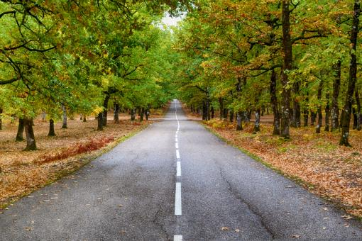 Free Stock Photo of Road lying ahead in the Forest Greece