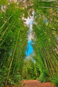 Free Stock Photo of Bamboo Keyhole Forest