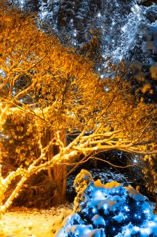 Free Stock Photo of Gold Winter Night - Meadowlark Gardens