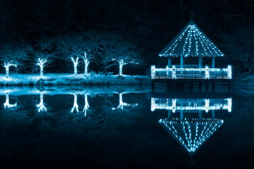 Free Stock Photo of Blue Winter Night - Meadowlark Gardens