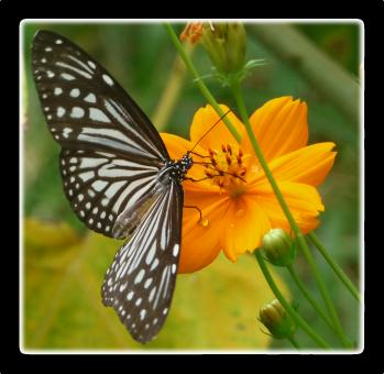 Free Stock Photo of Butterfly and Orange Flower