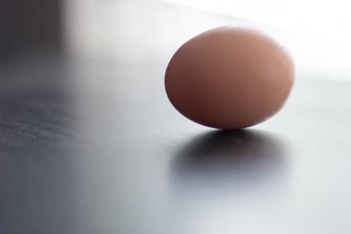 Free Stock Photo of Single Egg