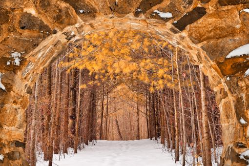 Free Stock Photo of Gold Winter Pine Portal