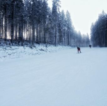 Free Stock Photo of Skiing in Forest