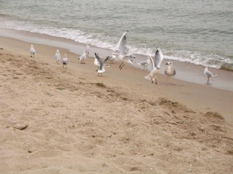 Free Stock Photo of Seagulls on the Beach