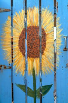 Free Stock Photo of Sunflower Door