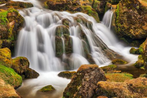 Free Stock Photo of Iceland Moss Cascades