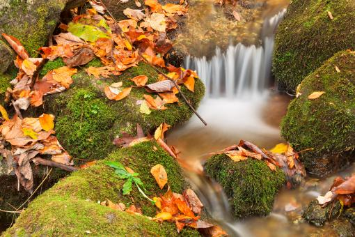 Free Stock Photo of Wigwam Autumn Moss Stream
