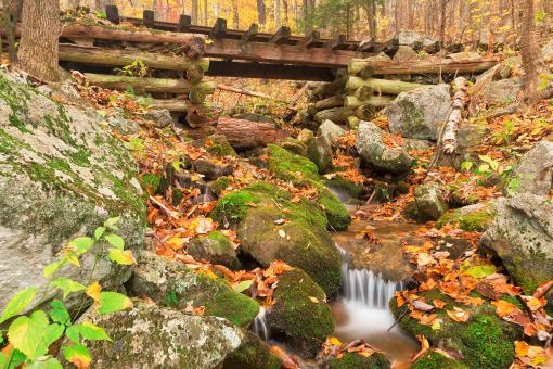 Free Stock Photo of Autumn Logging Railroad Stream