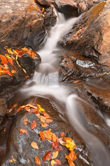 Free Stock Photo of Autumn Fossil Stream