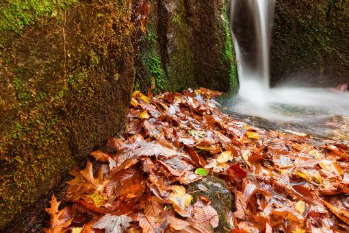 Free Stock Photo of Autumn Crabtree Stream