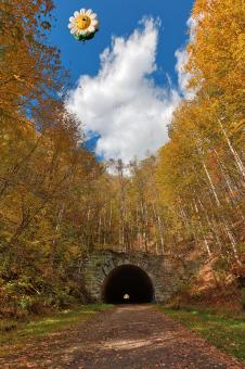 Free Stock Photo of Smiling Daisy Forest Tunnel