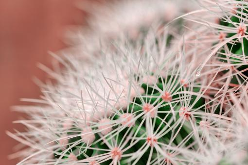Free Stock Photo of Cactus Dream Spines